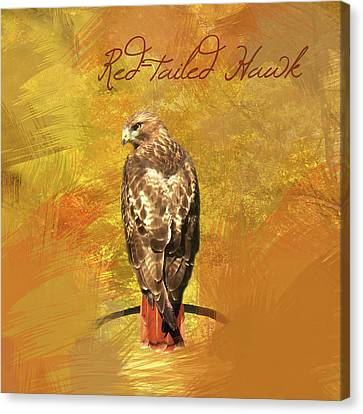 Canvas Print featuring the photograph Red-tailed Hawk Watercolor Photo by Heidi Hermes