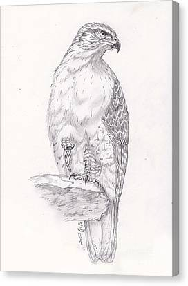 Red Tailed Hawk Canvas Print by William Heflin