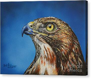 Red-tailed Hawk......honor Canvas Print