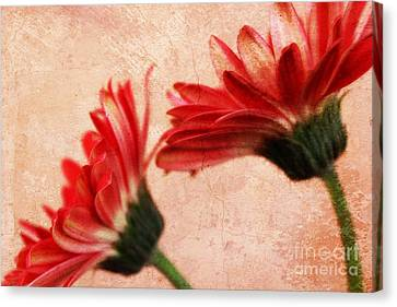 Red Texture 2 Canvas Print by Clare Bevan