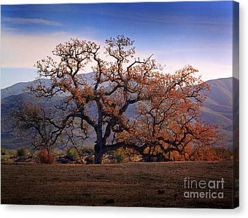 Red Top Tree Canvas Print by Frank Bez