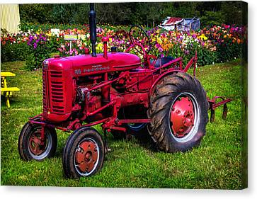 Shed Canvas Print - Red Tractor Dahlia Gardens by Garry Gay
