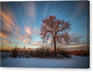 Canvas Print featuring the photograph Red Tree by Davorin Mance