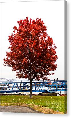 Red Tree Canvas Print by Victory  Designs