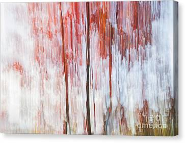 Red Trees By The Lake Canvas Print by Elena Elisseeva