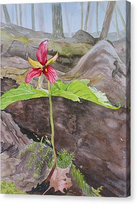 Red Trillium In The Spring  Canvas Print by Debbie Homewood