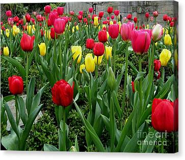 Red Tulip Canvas Print by Joyce Woodhouse