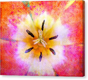 Red Tulip Canvas Print by Moon Stumpp