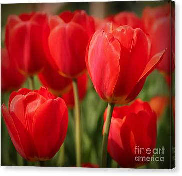 Red Tulips Canvas Print by Anita Jadhav