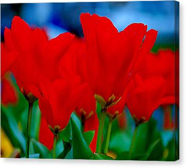 Canvas Print featuring the photograph Red Tulips by JoAnn Lense
