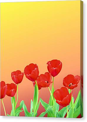 Red Tulips Canvas Print by Kristin Elmquist
