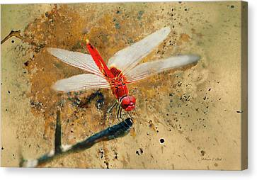 Canvas Print featuring the photograph Red Veined Darter Dragonfly by Bellesouth Studio