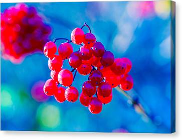 Canvas Print featuring the photograph Red Viburnum Berries by Alexander Senin