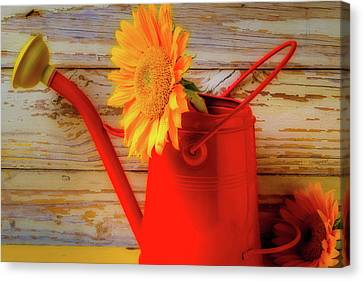 Red Watering Can And Sunflower Canvas Print