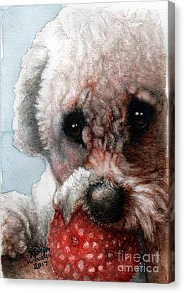 Toy Maltese Canvas Print - Red, White And Bella by Karen Wheeler
