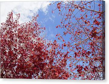 Canvas Print featuring the photograph Red White Blue Colors Of The Nature by Jingjits Photography