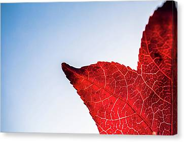 Canvas Print featuring the photograph Red White  Blue by Jingjits Photography