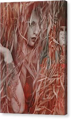 Red Willow  Canvas Print by Pamela Patch