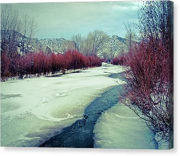Red Willows On The Embudo Canvas Print by Atom Crawford