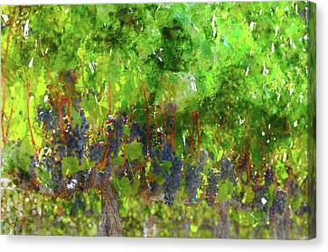 Wine Canvas Print - Red Wine Grapes Hanging On The Vine by Brandon Bourdages