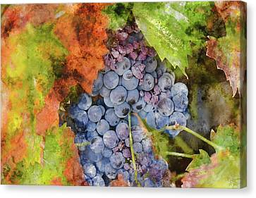 Red Wine Grapes In The Fall Canvas Print by Brandon Bourdages