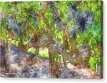 Red Wine Grapes In The Napa Vineyard Canvas Print by Brandon Bourdages