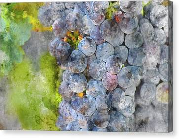 Red Wine Grapes On The Vine Macro Canvas Print by Brandon Bourdages