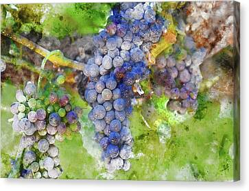 Wine Canvas Print - Red Wine Grapes On Vine by Brandon Bourdages