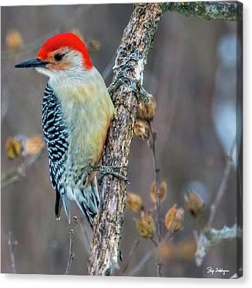Redbellied Woodpecker Canvas Print by Skip Tribby