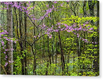 Redbud In The Rain Canvas Print by Thomas R Fletcher