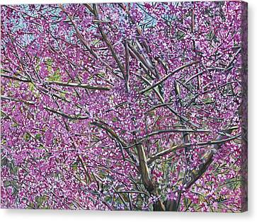 Canvas Print featuring the painting Redbud Tree by Nadi Spencer