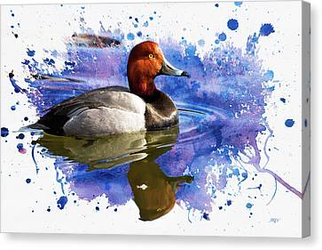 Redhead Drake Canvas Print