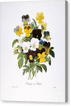 Redoute: Pansy, 1833 Canvas Print by Granger