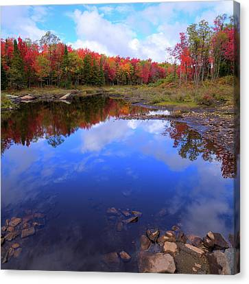 Reds Of Autumn Canvas Print by David Patterson