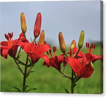 Day Lilly Canvas Print - Reds by Robert Pilkington