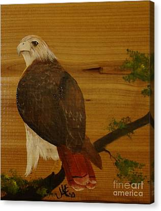 Redtail Canvas Print by Jena Gillam
