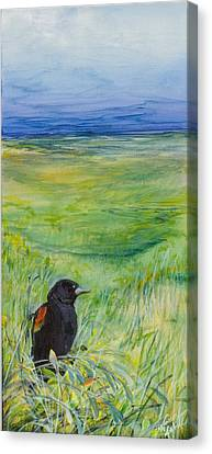 Redwing Blackbird Canvas Print by Michele Hollister - for Nancy Asbell