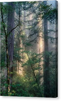 Redwood Network Canvas Print