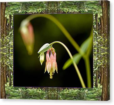 Canvas Print featuring the photograph Redwood Columbine by Bell And Todd