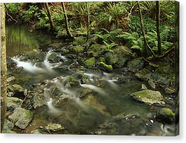 Redwood Creek Canvas Print