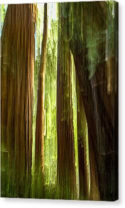 Canvas Print - Redwood Dream by Bill Gallagher