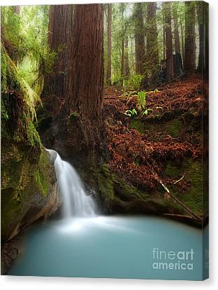 Redwood Forest Waterfall Canvas Print by Matt Tilghman
