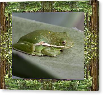 Canvas Print featuring the photograph Redwood Frog by Bell And Todd