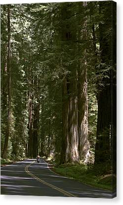 Redwood Highway Canvas Print by Wes and Dotty Weber