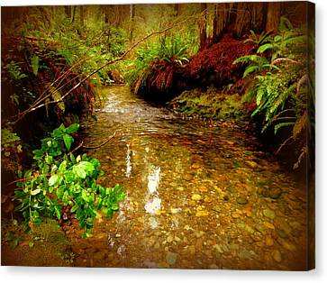 Redwood Stream Reflections Canvas Print
