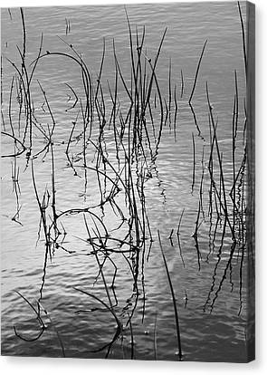 Canvas Print featuring the photograph Reeds by Art Shimamura