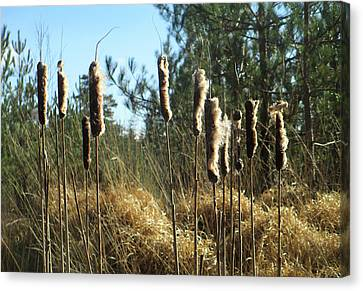 Reeds In The Wind Canvas Print by The Rambler