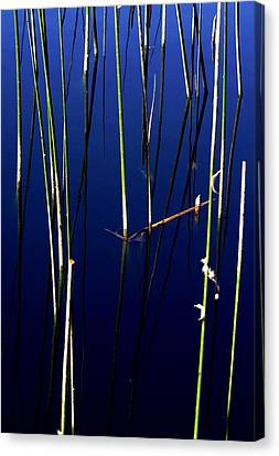 Reeds Of Reflection Canvas Print by Chris Brannen