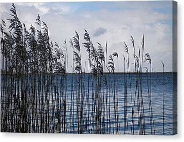 Canvas Print featuring the photograph Reeds by Votus