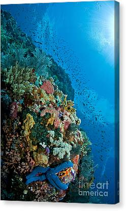 Reef Scene With Corals And Fish Canvas Print by Mathieu Meur